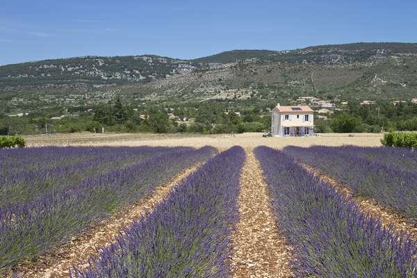Couleur lavande / Lavender fields
